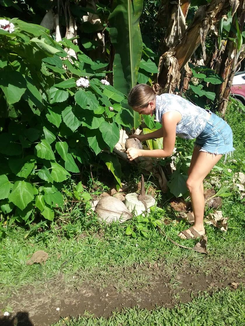 Coconut Husking